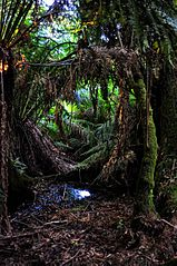 ancient fern forest with water pool